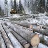 Laiks gatavot pārskatus par mežsaimniecisko darbību