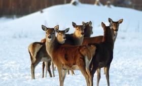 ☂ Vai meža dzīvniekus vajag piebarot?