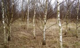 ☂ Kā ieaudzēt mežu lauksaimniecības zemē