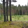 ☂ AS «Latvijas valsts meži» piedāvā Meža apsaimniekošanas pakalpojumu