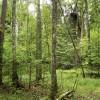 ☂ Dzīvnieku vairošanās laikā ir noteikti dažādi meža darbu ierobežojumi