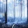 Saspringta situāciju ar meža ugunsgrēkiem