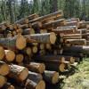 ☂ AS «Latvijas valsts meži» piedāvā produktu un pakalpojumu kopu LVM GEO