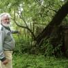 Pēc vētrām jāmeklē bīstamie koki