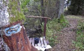 Māksliniece darbos aicina saudzēt koku