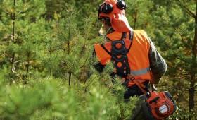 Darba aizsardzības prasības meža darbos