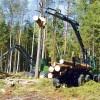 LVM mežizstrādes konkursā pieteikušies 40 uzņēmumi