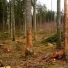 ☂ Mežā jāsaglabā ekoloģiskie koki