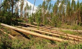 Vētra posta Austrumvidzemes mežus