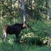 Jauns memorands medījamo dzīvnieku postījumu samazināšanai