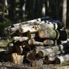 Topošā ES direktīva par CO2 emisijām draud ierobežot mežizstrādi Latvijā