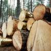 ☂ Par mežpārkāpumiem likums paredz administratīvo vai kriminālo atbildību