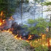 Beidzies meža ugunsnedrošais laikposms