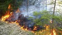 Viens no meža apsaimniekošanas izaicinājumiem nākotnē – uguns