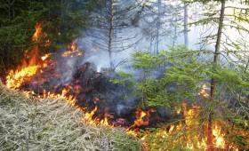 196 meža ugunsgrēki mēneša laikā