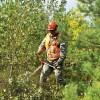 Turpmāk piemaksās par augstākas kvalitātes mežkopības pakalpojumiem