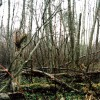 Atbalsti centienus aizsargāt meža īpašnieku tiesības, nepieļaujot nekontrolētu aprobežoto teritoriju palielināšanu!