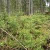Meža īpašniekiem pieejams ES atbalsts