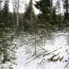 Mežā pavadīts pus gadsimts