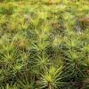 Vēl var pieteikties atbalstam uz «Meža ieaudzēšanu»