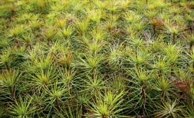 Mežs atjaunots par 1800 ha vairāk