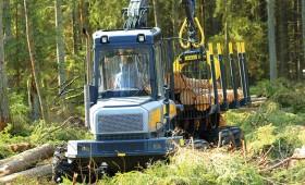 Saruks koku ciršanas apjoms valsts mežos galvenajā cirtē