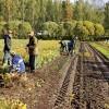 AS «Latvijas valsts meži» šogad plāno iestādīt 23 miljonus koku stādu