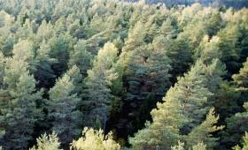 ☂ Kā Latvijai kļūt par zaļāko valsti pasaulē