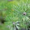 ES politikai vajadzētu vairāk atzīt mežsaimniecības vērtības