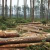 Izmaiņas noteikumos par koku ciršanu mežā