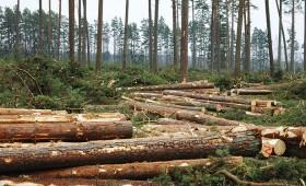 Administratīvo atbildību mežā turpmāk regulēs Meža likums
