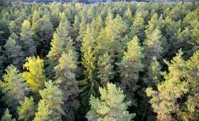 Valsts meža dienesta Gada cilvēks 2018