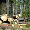 Meža īpašnieki pieprasa efektīvu atbalstu mežsaimniecībai