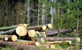 Kā saņemt apliecinājumu koku ciršanai