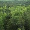 Kā privātos mežus apsaimnieko Igaunijā