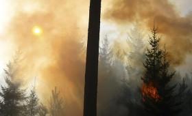 Pasīva meža apsaimniekošana veicina mežu ugunsgrēkus