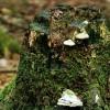 Precizē aizsargājamo biotopu noteikšanu