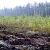 Precizēti atbalsta saņemšanas nosacījumi ieguldījumiem meža platības paplašināšanā un dzīvotspējas uzlabošanā