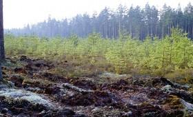 Konkursi mineralizēto joslu kopšanas un latvāņu ierobežošanas darbiem