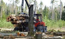 LVM iepirkums apaļo kokmateriālu ražošanas pakalpojumam 2019.–2023.gadā