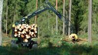 Pameža saglabāšana meža darbos