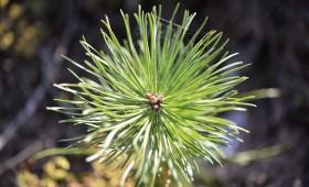 Meža īpašniekiem pieejams atbalsts