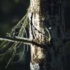 Meža īpašnieku organizācijas pasniedz balvu «Melnais Čiekurs»