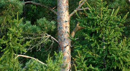 ☂ Meža īpašnieku pienākumi liek aizdomāties