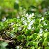 Trešajā dabas skaitīšanas sezonā apsekos pusmiljonu hektāru zemes