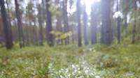 Eiropā veido meža nozares politiku