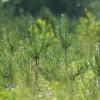 LVM ir iegādājusies 10 tūkst. ha meža zemes