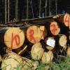 ☂ Koksnes cenu nosaka vairāki faktori