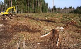 ☂ Var vākt malku pēc mežizstrādes