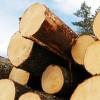 ☂ Uz izmaiņām koksnes tirgū jāreaģē ātri